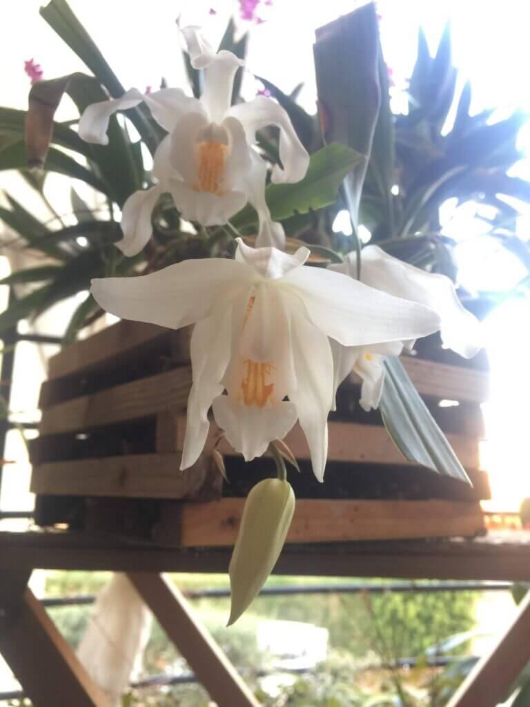 appendere le orchidee all'esterno