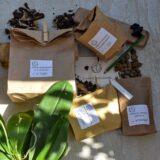 Bento-Rinvasa phalaenopsis